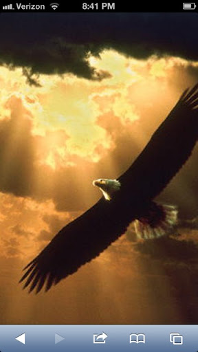 Eagle Eye Exterminating picture