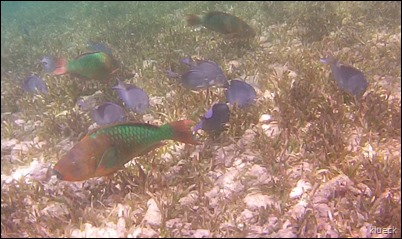 reef sceen, multiple fish