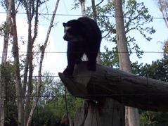 2007.08.09-014 ours à lunettes