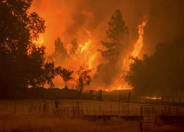Flames from the Butte fire rise over a pasture in Mountain Ranch, California, on 12 September 2015. Photo: Noah Berger / Reuters