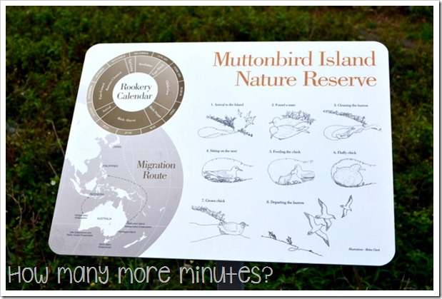 Muttonbird Island | How Many More Minutes?