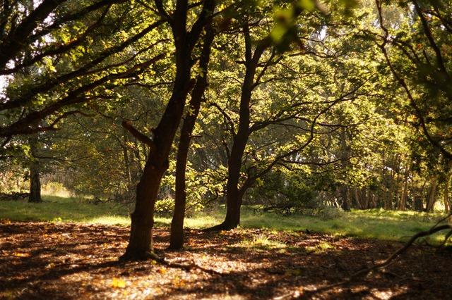 Autumn afternoon in Norfolk