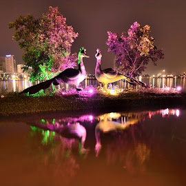 Lights under Night by Kuntal Das - City,  Street & Park  Night ( water, park, sunset, night, travel, river, city )