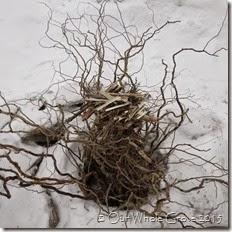 willow fire nest