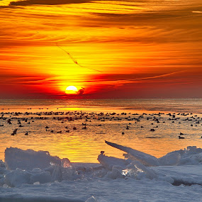 Last Open Water by Bud Schrader - Landscapes Sunsets & Sunrises ( water, marblehead, sunrise, seascape, lake erie )