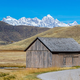 Old Shed at Elk Refuge by Chad Roberts - Buildings & Architecture Public & Historical ( shed, elk refuge, miller house, wyoming, house, jackson hole, grand tetons )