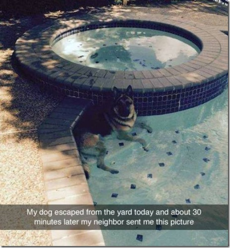 dog-love-friend-008