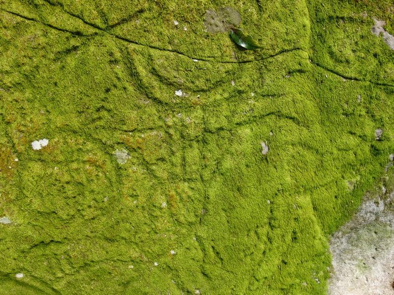 2014_0101-0105 萬山神石、萬山岩雕順訪萬頭蘭山_0759