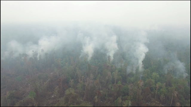 Forest and peatland fires on the border of the palm oil concession, Ketapang Regency, West Kalimantan, September 2015. This forest is Orang-utan habitat. Photo: Greenpeace