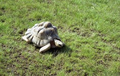 1991.08.24-098.21 tortue