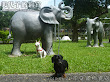 兩隻狗都很喜歡步,照慣例要和大象拍張照。