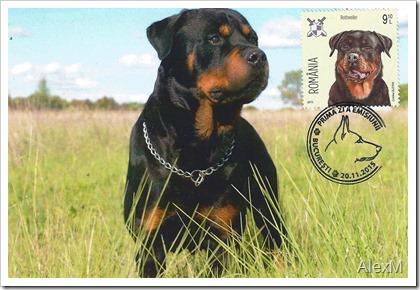 2084_Rottweiler