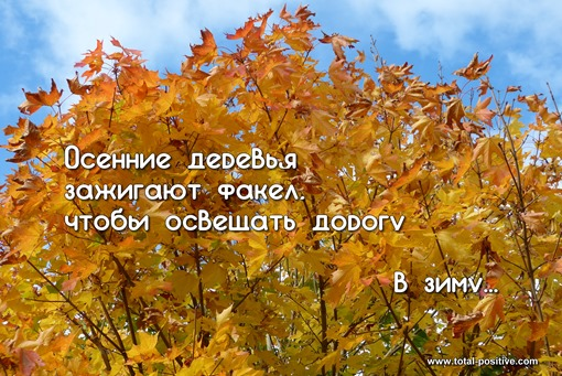 Класно-желтые листья клена