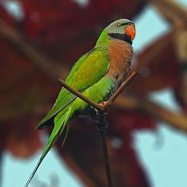 by Kanchan D - Animals Birds