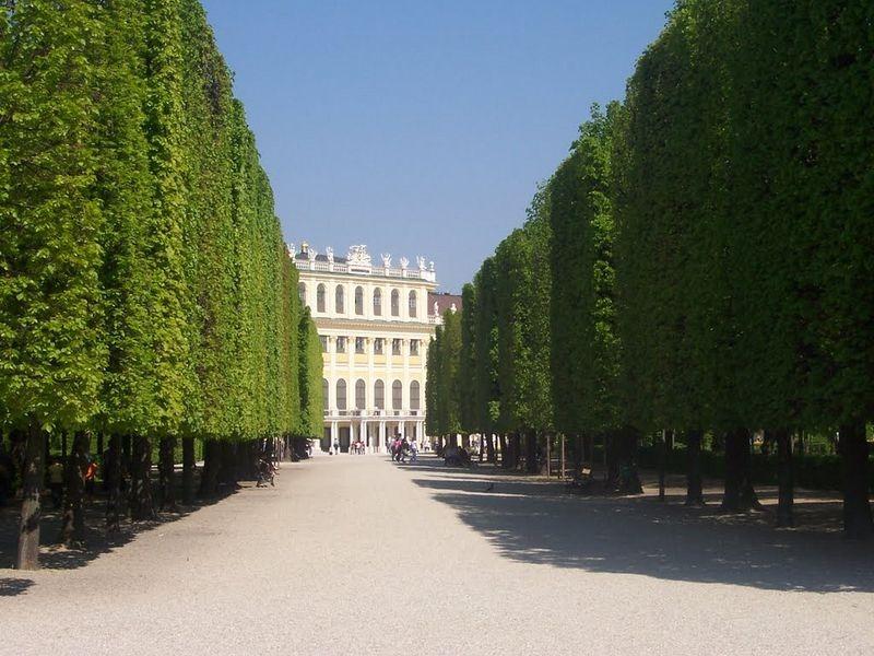 schönbrunn-palace-trimmed-trees-1