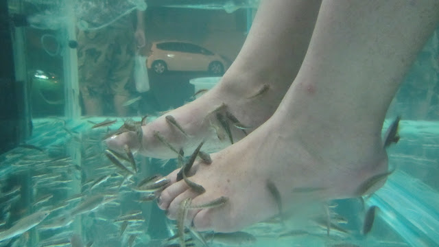 Heather's feet getting devoured at the Fish Spa.