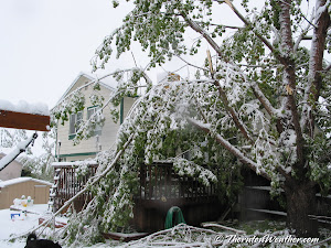 May 10, 2003 - Heavy, wet snow weighed down trees, damaging many. (ThorntonWeather.com)