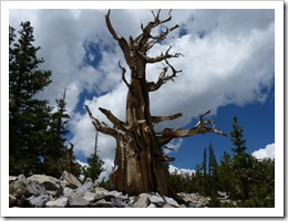 Great Basin N.P NV