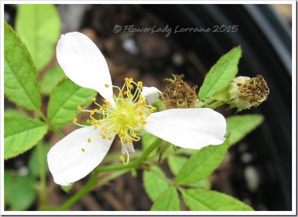 08-14-sf-cem-seedling