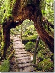 TreeswitMA29079731-0017 - Copy - Copy