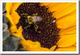 like a busy little bee