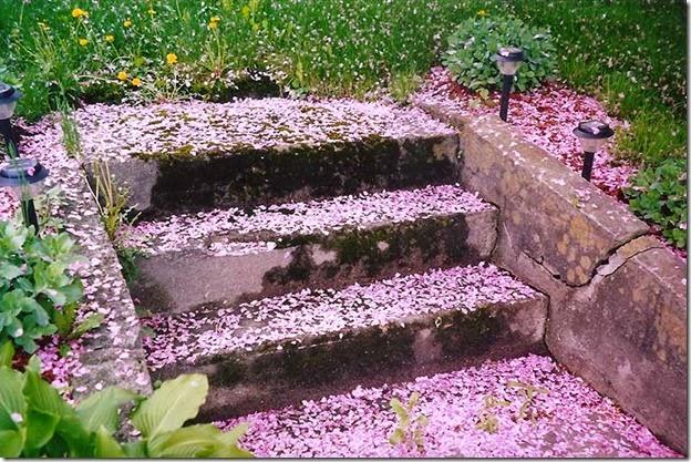 CrabappleBlossoms2