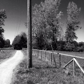 Winding Path by Ernie Kasper - Instagram & Mobile iPhone ( fence, outdoors, path, trees, scenery, landscape )