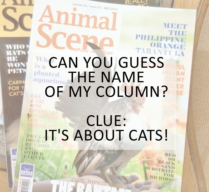 Stef dela Cruz cat column