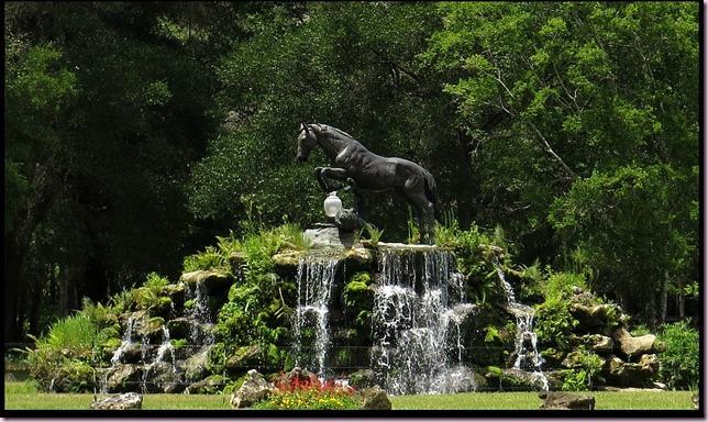horsecloseIMG_1227
