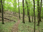 Forest path, Little Bennett Regional Park.