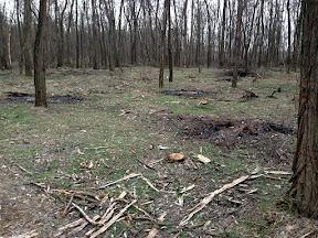 лес30.jpg
