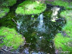 V této oblasti se nachází 27 maloplošných zvláště chráněných území, mnoho druhů chráněných rostlin, jako například masožravá rosnatka okrouhlolistá (v oblasti Kladských rašelin poblíž Mariánských Lázní) nebo rožec kuřičkolistý (hadcové výchozy, např. rezervace Křížky), který se jinde na světě nevyskytuje.