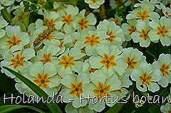Glória Ishizaka - Hortus Botanicus Leiden - 20