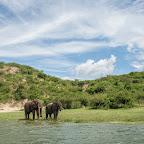 Elefanten am Kazinga-Kanal, Queen Elizabeth Nationalpark © Foto: Marco Penzel   Outback Africa