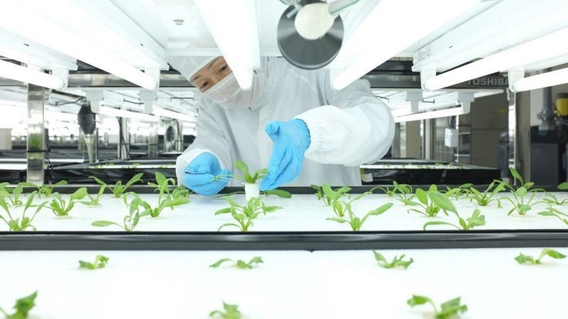 toshiba-farm-worker-checks-plant-1