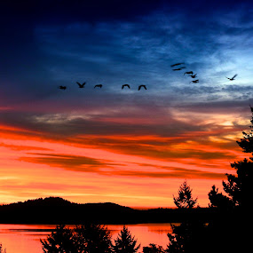 Into the Light by Campbell McCubbin - Landscapes Sunsets & Sunrises ( dawn, silhouette, sunrise, canada geese, geese )
