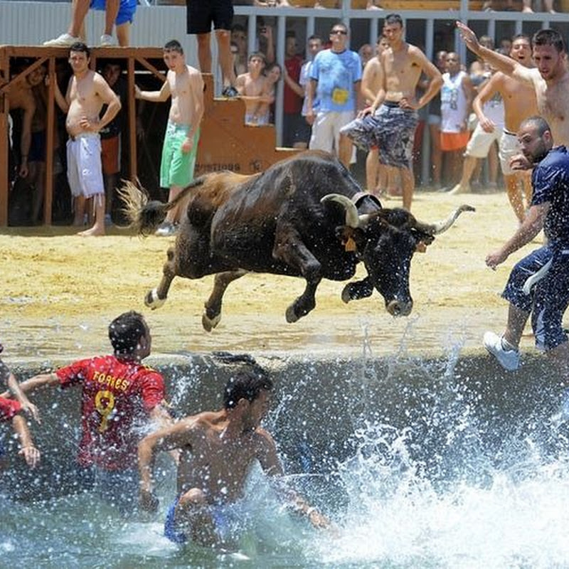 Bous a la Mar: The Spanish Festival of Chasing Bulls to The Sea
