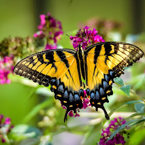 Backyard Beauty by Robert Golub - Animals Insects & Spiders