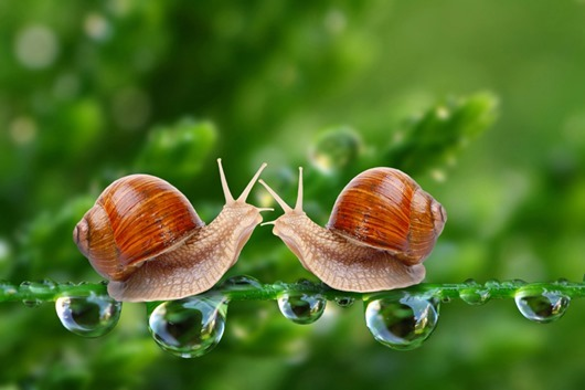 two-snails