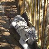 TIGERS Preservation Station - Myrtle Beach - 040510 - 06
