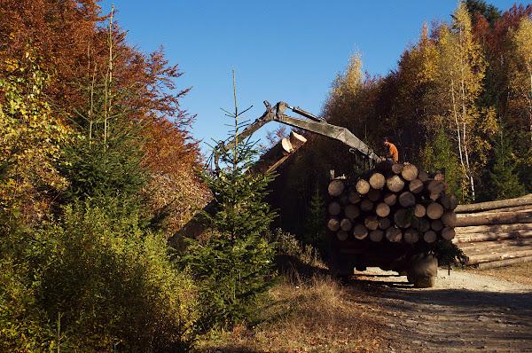 вырубка леса карпаты осень лесозаготовка