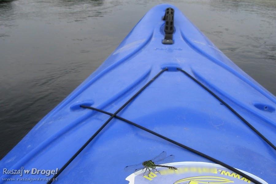 Spływ kajakowy rzeką Wdą