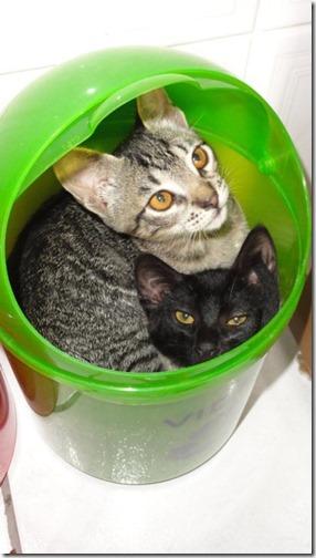 gatos sitios para esconderse (12)