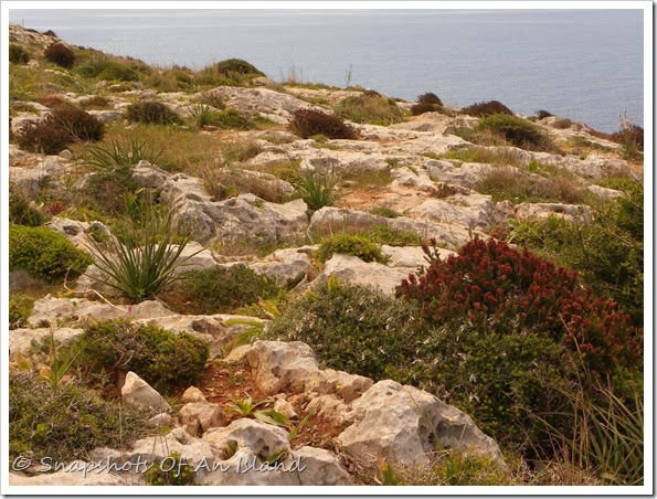 Congreve Memorial and Wied iz-Zurrieq (57)