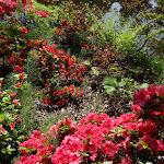 Arboretum de la Vallée-aux-Loups :