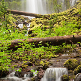 Water Trails by Jodie Lindbo - Landscapes Forests ( oregon, proxy falls, creek, waterfall, forest, rocks )