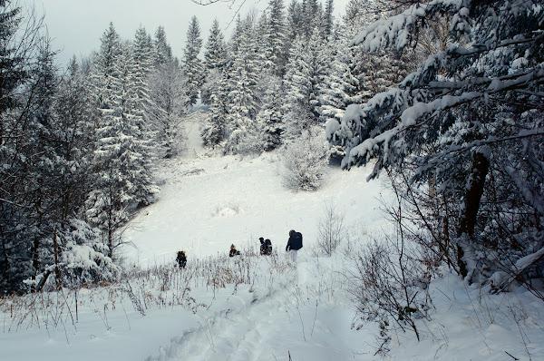 зима карпаты горы снег зимний поход