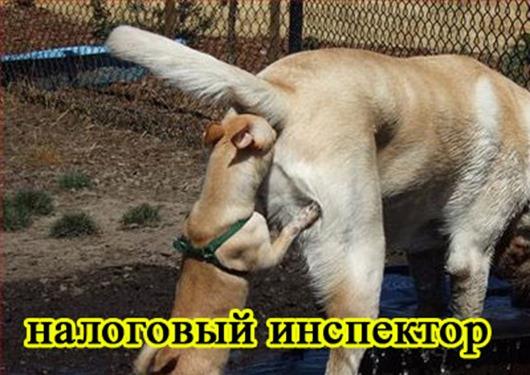 foto-sobaki.narod.ru42