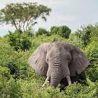 Elefant im Queen Elizabeth Nationalpark © Foto: Marco Penzel   Outback Africa