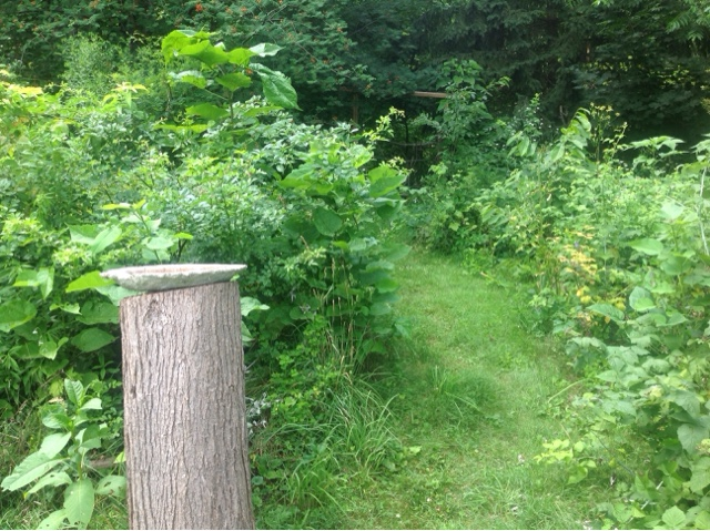 Forest Gardening Articles And Resources From Lillie House